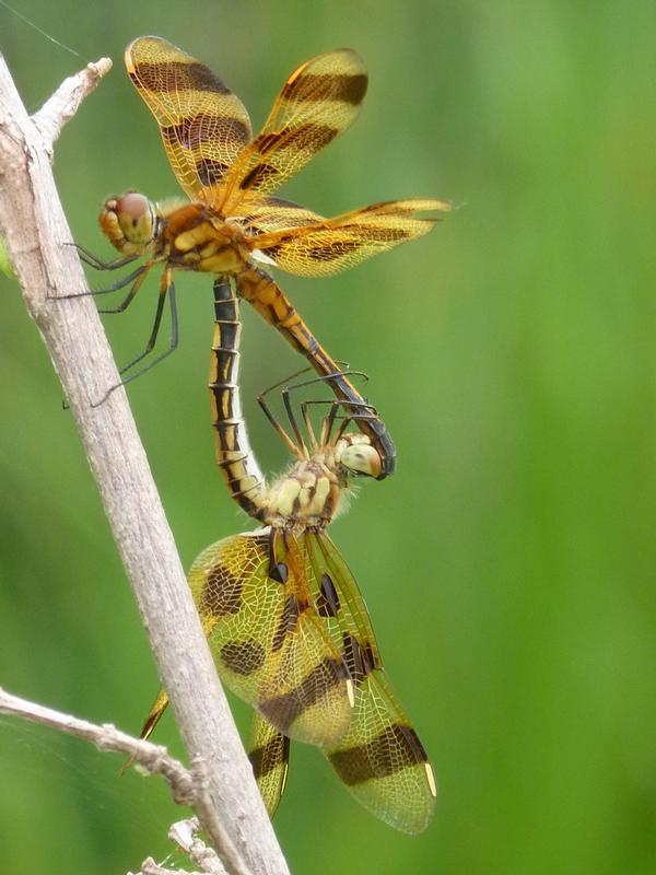 Photo of Halloween Pennant