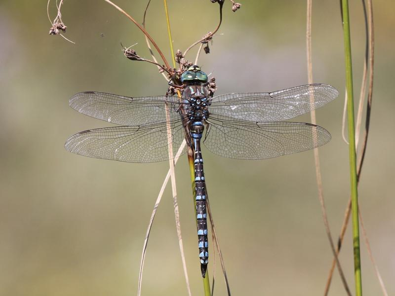 Photo of Lake Darner