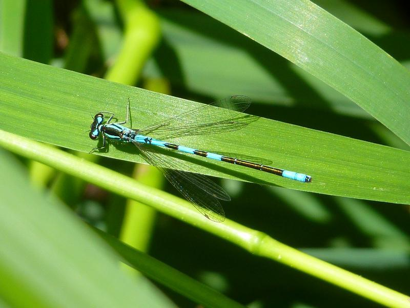 Photo of Taiga Bluet