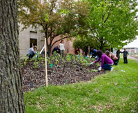 Employees of MGE planting a pollinator garden